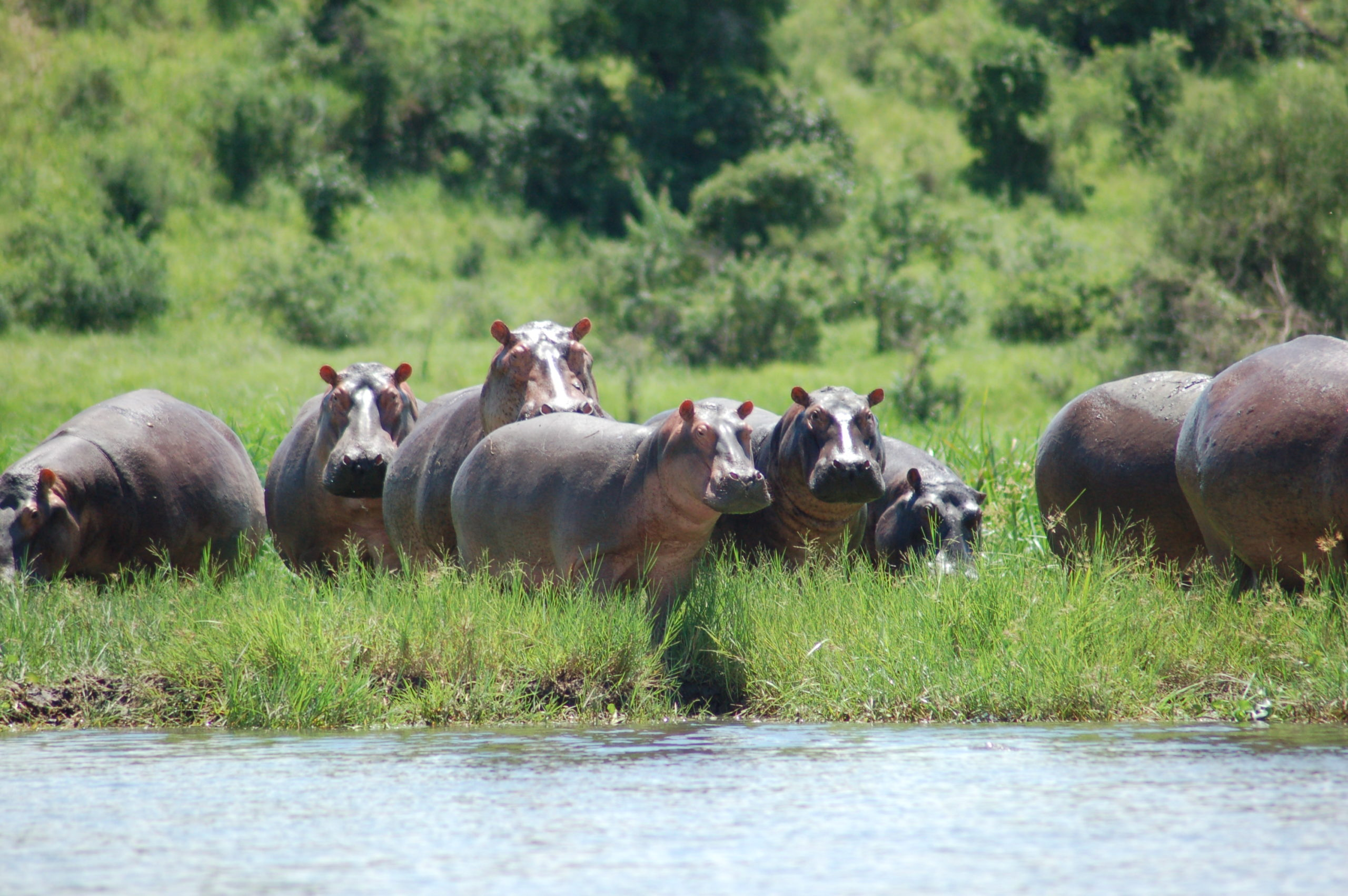 11 Days Uganda Culture & Wildlife Tour